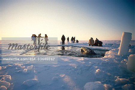 Local Alaskans & News Crews view whales trapped by sea ice through a breathe hole near Point Barrow during the 1988 California Gray Whale Rescue, Arctic Alaska, Winter/n Stock Photo - Rights-Managed, Image code: 854-03646067