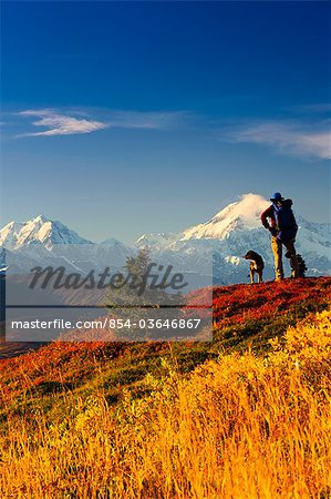 A male backpacker and his dog enjoy the view of Mt. McKinley while backpacking in Peters Hills, Denali State Park, Southcentral Alaska, Fall/n Stock Photo - Rights-Managed, Image code: 854-03646867