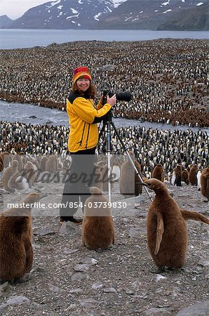 Woman photographs at a  King penguin rookery, St. Andrew's Bay, Island of South Georgia, Antarctica, Summer Stock Photo - Rights-Managed, Image code: 854-03739830