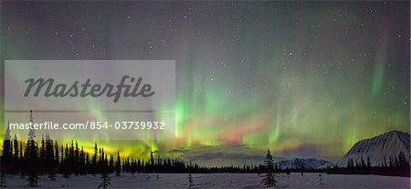 View of Northern Lights and spruce trees in Broad Pass, Southcentral Alaska, Winter Stock Photo - Rights-Managed, Image code: 854-03739932