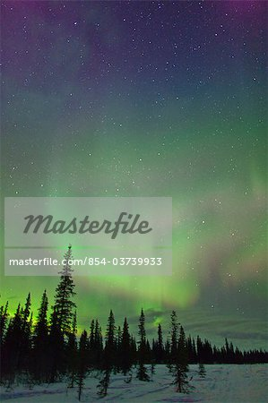 View of Northern Lights and spruce trees in Broad Pass, Southcentral Alaska, Winter Stock Photo - Rights-Managed, Image code: 854-03739933
