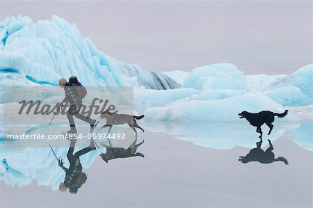Man ice skating at Sheridan Glacier with two dogs reflecting in thin layer of water on ice and icebergs in the background, Cordova, Southcentral Alaska, Winter Stock Photo - Rights-Managed, Image code: 854-05974492