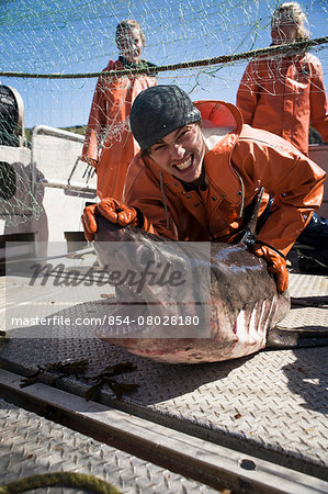A Salmon Shark Caught While Salmon Fishing In The Alaska Department Of Fish And Game 'alaska Peninsula Area' Also Known As 'area M'. This Has Been A Controversial Fishing Region. Stock Photo - Rights-Managed, Image code: 854-08028180
