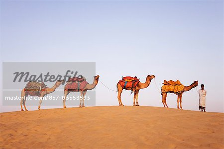 Four camels standing in a row with a man in a desert, Jaisalmer, Rajasthan, India Stock Photo - Rights-Managed, Image code: 857-03553593