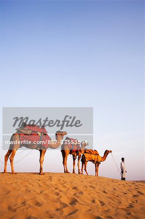 Four camels standing in a row with a man in a desert, Jaisalmer, Rajasthan, India Stock Photo - Rights-Managed, Image code: 857-03553594