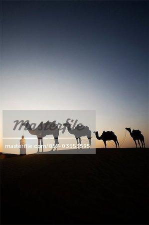 Four camels standing in a row with a man in a desert, Jaisalmer, Rajasthan, India Stock Photo - Rights-Managed, Image code: 857-03553595