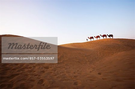 Four camels standing in a row with a man in a desert, Jaisalmer, Rajasthan, India Stock Photo - Rights-Managed, Image code: 857-03553597
