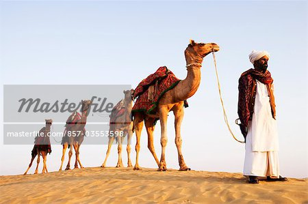 Four camels standing in a row with a man in a desert, Jaisalmer, Rajasthan, India Stock Photo - Rights-Managed, Image code: 857-03553598