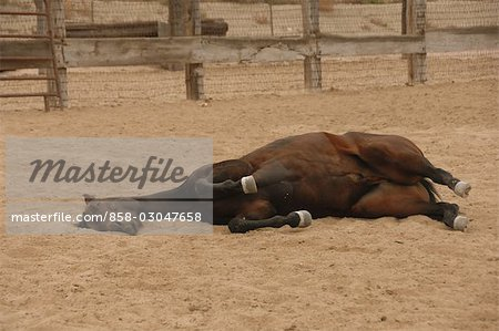 Horse on the Ground Stock Photo - Rights-Managed, Image code: 858-03047658