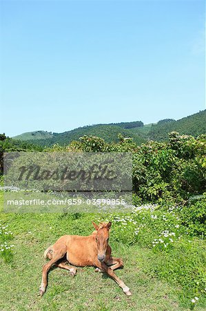 Horse,Cape Toi,Miyazaki,Japan Stock Photo - Rights-Managed, Image code: 859-03598856