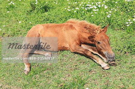 Horse,Cape Toi,Miyazaki,Japan Stock Photo - Rights-Managed, Image code: 859-03598857