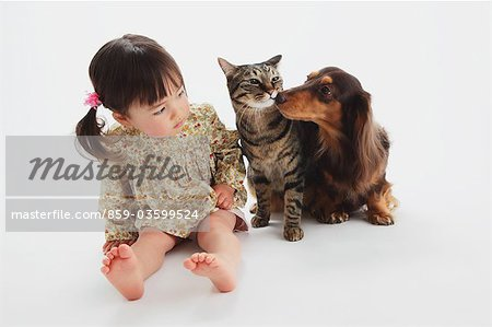 Japanese Cat-Miniature Dachshund And A Girl Stock Photo - Rights-Managed, Image code: 859-03599524