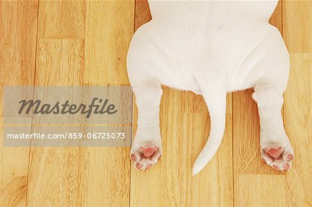 Dog bottom Stock Photo - Rights-Managed, Image code: 859-06725073