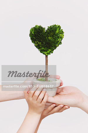 Hands holding heart-shaped plant Stock Photo - Rights-Managed, Image code: 859-06808637