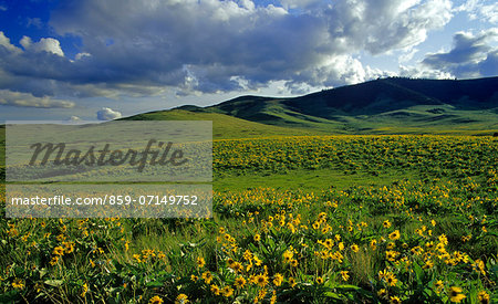 Montana, America Stock Photo - Rights-Managed, Image code: 859-07149752