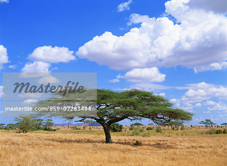 Serengeti National Park, Tanzania Stock Photo - Rights-Managed, Image code: 859-07283494