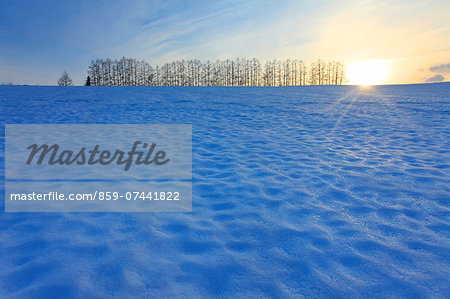 Biei, Hokkaido Stock Photo - Rights-Managed, Image code: 859-07441822