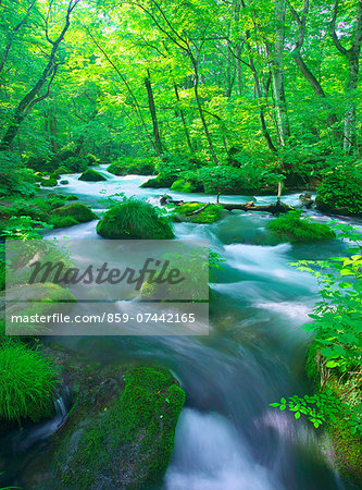 Oirase mountain stream, Aomori Prefecture Stock Photo - Rights-Managed, Image code: 859-07442165