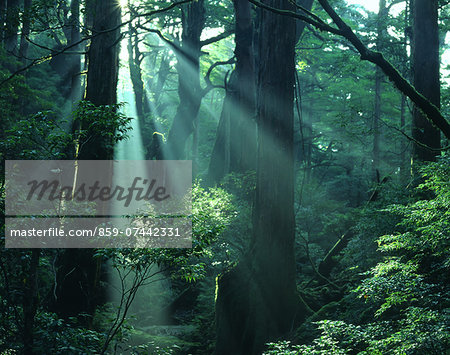 Yakushima Island, Kagoshima Prefecture Stock Photo - Rights-Managed, Image code: 859-07442331