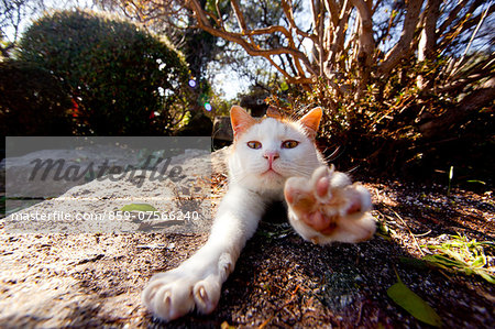 Cat Stock Photo - Rights-Managed, Image code: 859-07566240