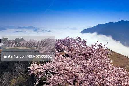 Hyogo Prefecture, Japan Stock Photo - Rights-Managed, Image code: 859-07635801