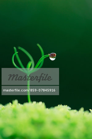 Sprout Stock Photo - Rights-Managed, Image code: 859-07845916