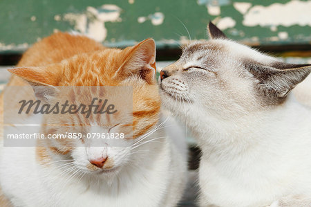 Stray cats Stock Photo - Rights-Managed, Image code: 859-07961828