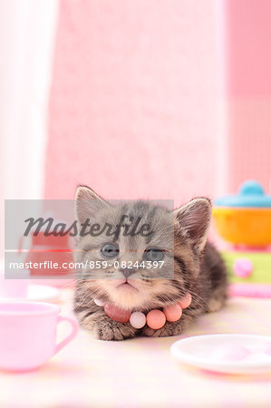 Cat Portrait Stock Photo - Rights-Managed, Image code: 859-08244397