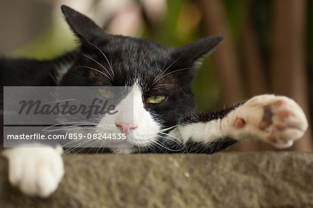 Cat Portrait Stock Photo - Rights-Managed, Image code: 859-08244535