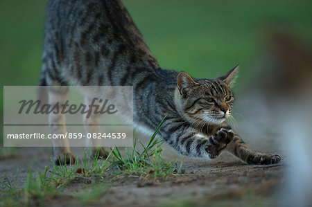 Cat Portrait Stock Photo - Rights-Managed, Image code: 859-08244539