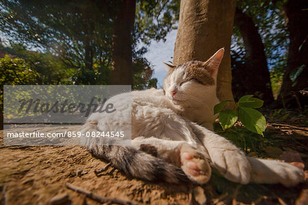 Cat Portrait Stock Photo - Rights-Managed, Image code: 859-08244545