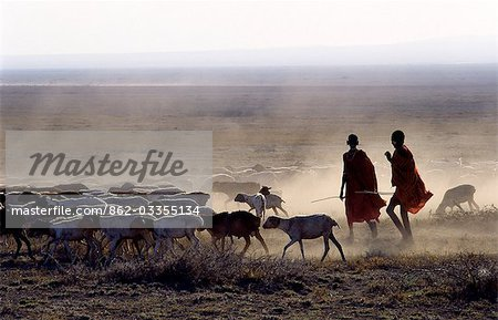 In the early morning,a Maasai herdsboy and his sister drive their family's flock of sheep across the friable,dusty plains near Malambo in northern Tanzania. Stock Photo - Rights-Managed, Image code: 862-03355134