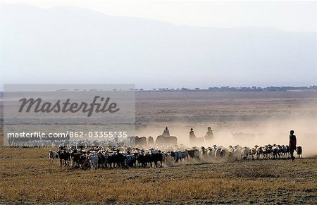 In the early morning,a Maasai family drives their livestock across the friable,dusty plains near Malambo in northern Tanzania. Stock Photo - Rights-Managed, Image code: 862-03355135