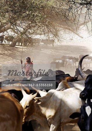 A Maasai warrior drives his family's cattle to the Sanjan River in northern Tanzania Stock Photo - Rights-Managed, Image code: 862-03355150