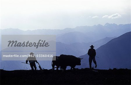 Silhouette of ploughmen with oxen,Colca Canyon,Peru. Stock Photo - Rights-Managed, Image code: 862-03360416