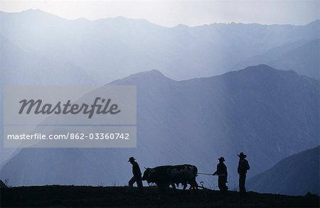 Peru,Colca Canyon. Silhouetted ploughmen with oxen Stock Photo - Rights-Managed, Image code: 862-03360742