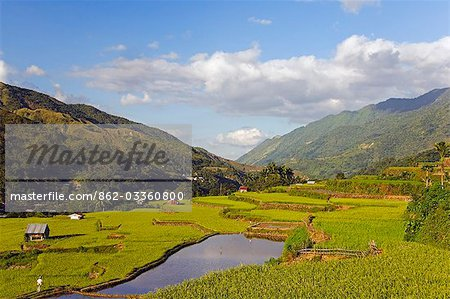 Philippines,Luzon Island,The Cordillera Mountains,Kalinga Province,Tinglayan. Rice terraces in Luplula village. Stock Photo - Rights-Managed, Image code: 862-03360800