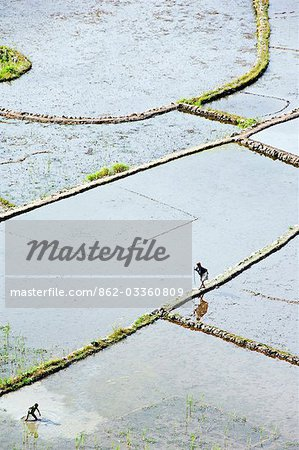 Philippines,Luzon Island,The Cordillera Mountains,Kalinga Province,Tulgao Village near Tinglayan. Elderly woman and local boy working in water filled rice terraces with fish traps. Stock Photo - Rights-Managed, Image code: 862-03360809