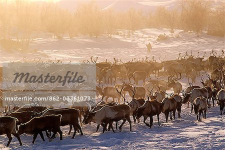 Russia,Kamchakta. Herding reindeer across the winter tundra,Palana,Kamchatka,Russian Far East Stock Photo - Rights-Managed, Image code: 862-03361073