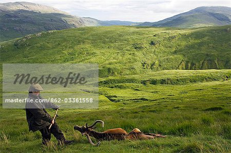 Dragging a red deer stag off the hill at the end of a successful stalk on the Benmore Estate Stock Photo - Rights-Managed, Image code: 862-03361558