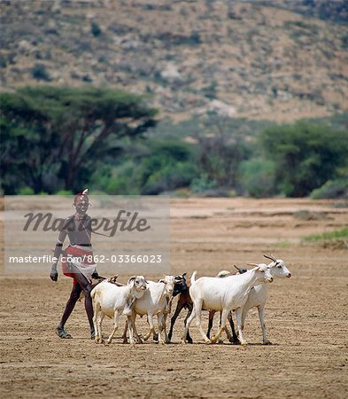 A Samburu Warrior drives his goats along the wide,sandy seasonal watercourse of the Milgis where waterholes dug by the Samburu in the dry season are a lifeline for pastoralists in this semi-arid region of their district. Stock Photo - Rights-Managed, Image code: 862-03366023