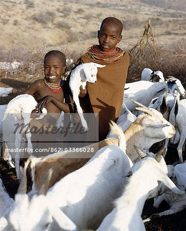 In the early morning,young Samburu girls take kids to their mothers. They will then milk the nanny goats leaving half the milk for the kids. Only women and children milk goats although every member of the family will drink the milk. Stock Photo - Rights-Managed, Image code: 862-03366028