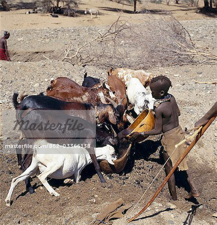 Turkana women and girls are responsible for watering livestock,which is unusual among pastoral societies. Here,a young girl waters goats from a waterhole dug in the sand of a seasonal watercourse. Her young brother will control the flow of stock to the water trough. In the background,a man digs out another waterhole; they have to been deepened regularly towards the end of the dry season. Stock Photo - Rights-Managed, Image code: 862-03366138