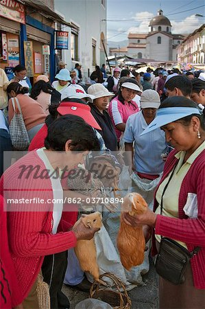 Ecuador, Guinea pigs at the weekly Sangolqui market,considered a delicacy here and Peru. Stock Photo - Rights-Managed, Image code: 862-03710894