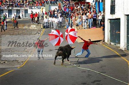 Bullfight (tourada a corda) in Porto de Pipas. Angra do Heroismo. Terceira, Azores islands, Portugal Stock Photo - Premium Rights-Managed, Artist: AWL Images, Code: 862-03889240