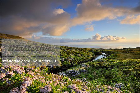 Central plateau with hydrangeas at dusk. Flores, Azores islands, Portugal Stock Photo - Rights-Managed, Image code: 862-03889281