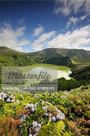 Crater lake with hydrangeas in the foreground, Caldeira Funda. Azores islands, Portugal Stock Photo - Rights-Managed, Image code: 862-03889283