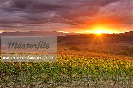 Italy, Umbria, Perugia district. Autumnal Vineyards near Montefalco Stock Photo - Rights-Managed, Image code: 862-05998223