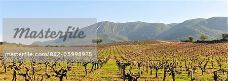 Vineyards in the Arrabida Natural Park. Portugal Stock Photo - Rights-Managed, Image code: 862-05998925