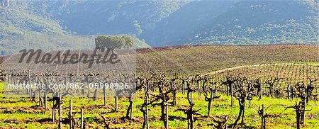 Vineyards in the Arrabida Natural Park. Portugal Stock Photo - Rights-Managed, Image code: 862-05998926